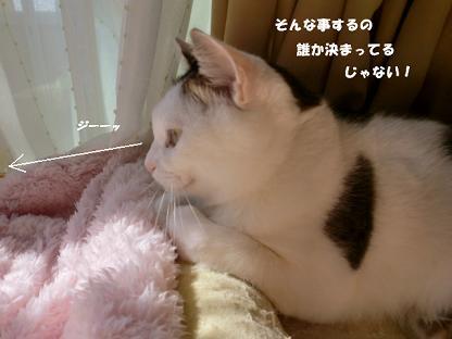 コピー ~ CIMG1188