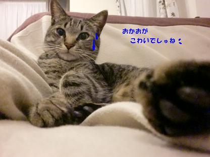 コピー ~ CIMG3147