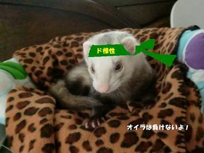 コピー ~ CIMG3248