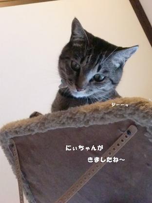 コピー ~ CIMG2952