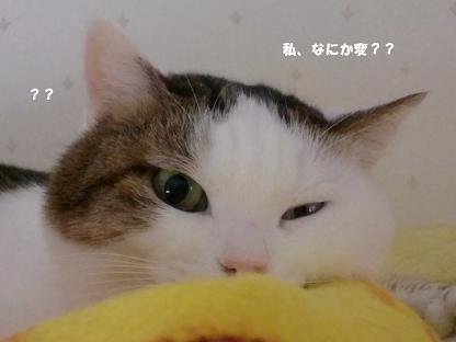 コピー ~ CIMG3377