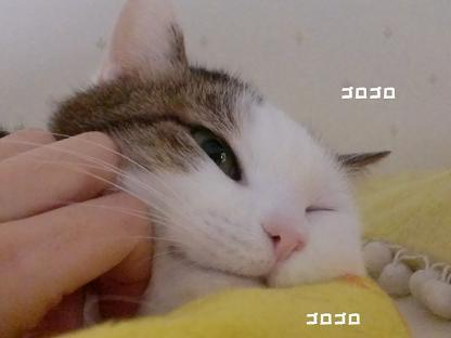 コピー ~ CIMG3381