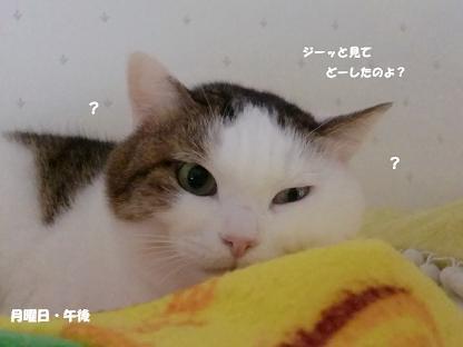 コピー ~ CIMG3375