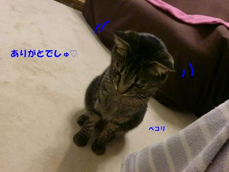 コピー ~ CIMG3533