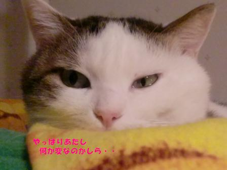 コピー ~ CIMG3408
