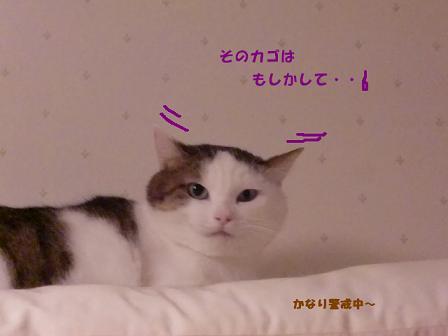 コピー ~ CIMG3521