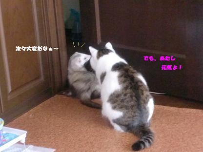 コピー ~ CIMG3478
