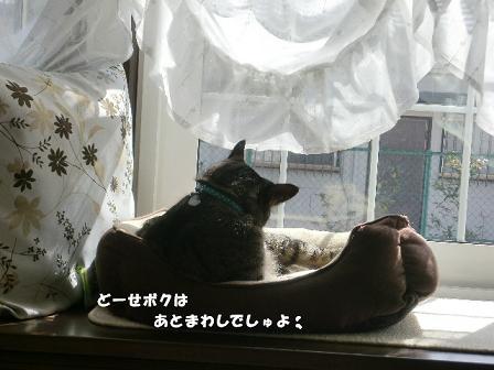 コピー ~ CIMG3599