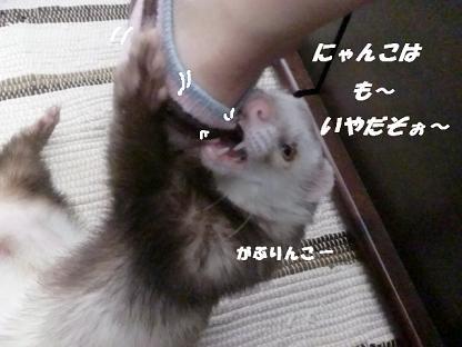 コピー ~ CIMG3417