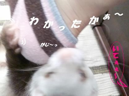 コピー ~ CIMG3418