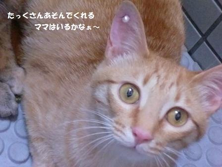 CIMG4110 - コピー (2)