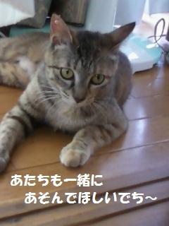 ミィちゃん610 - コピー