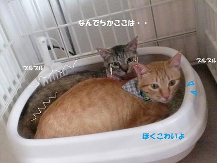 CIMG4279 - コピー