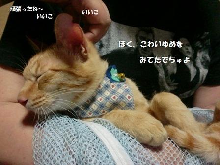CIMG4294 - コピー