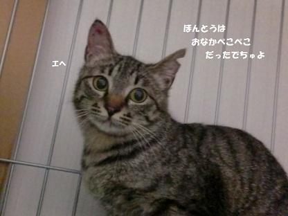 CIMG4305 - コピー (2)