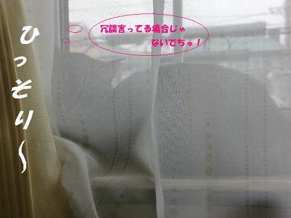 CIMG4327 - コピー