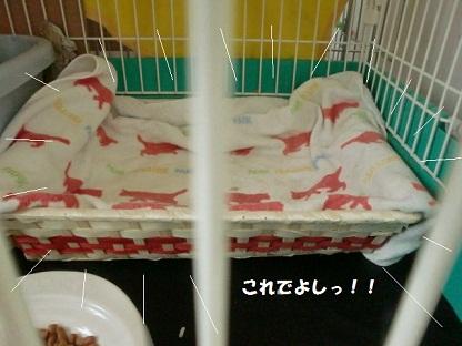 CIMG4346 - コピー