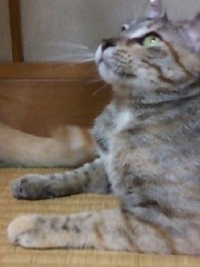 Sさん宅ミィ - コピー