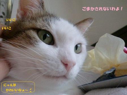 CIMG4686 - コピー