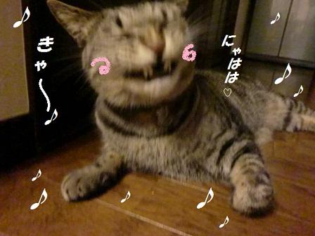 CIMG4663 - コピー