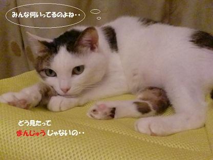 CIMG4676 - コピー