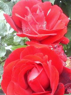 NEC_0111_20090703142434.jpg