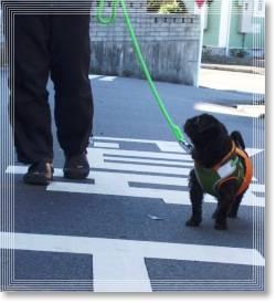 俺の散歩2