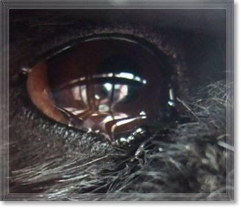 瞳はダイヤモンド