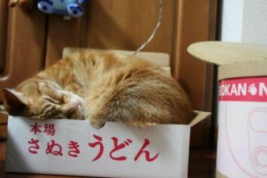 ぷんちゃん4