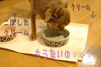 DSC_0284_20081229033250.jpg