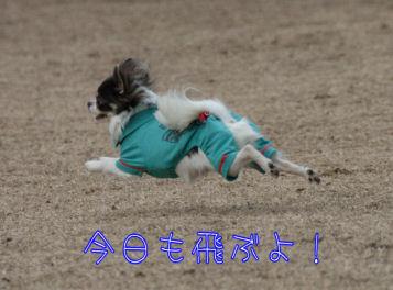 DSC_0964.jpg