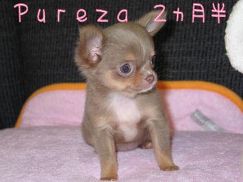 pureza2.5month