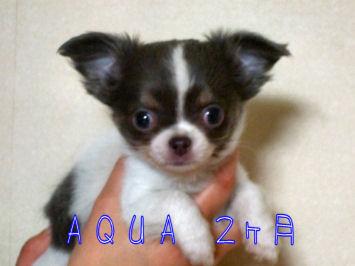 aqua2month