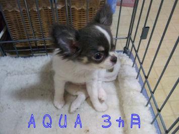 aqua3month