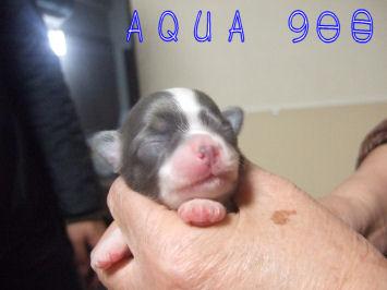 aqua9day