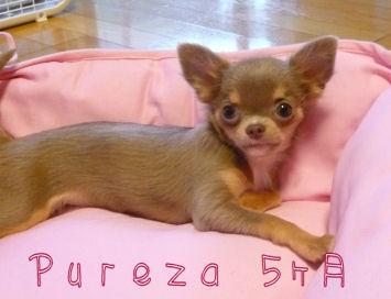 pureza5month