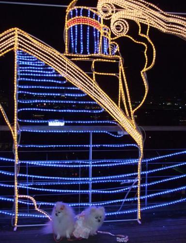2008年12月20日 131