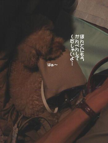 DSC06207a.jpg
