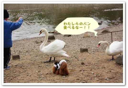 IMG_6238.jpg