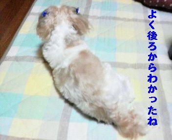 2009071621120000.jpg