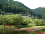 2009 08 03 ダム湖から道路.JPG