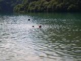 姪さんとジョジョの泳ぎ.JPG