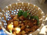 2009 09 25 今日の収穫.JPG
