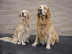 2003 11 09 Buddy&Kana.jpg
