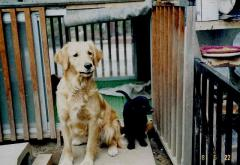 1996 05 22 Peru2歳.jpg