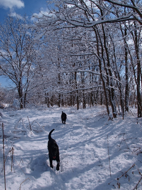 Top2010 02 02 雪上レトリーブ
