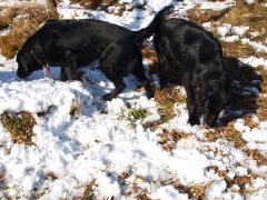 雪の中でもクンクン遊び大好き!