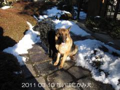 2011 03 10 互いはにかみ犬.JPG