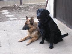 2011 03 14 ヒラリー&パール