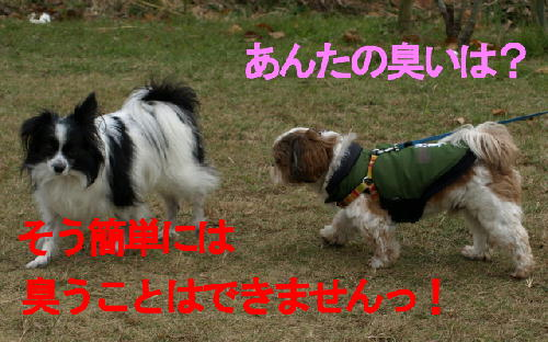 4a_20081201225313.jpg